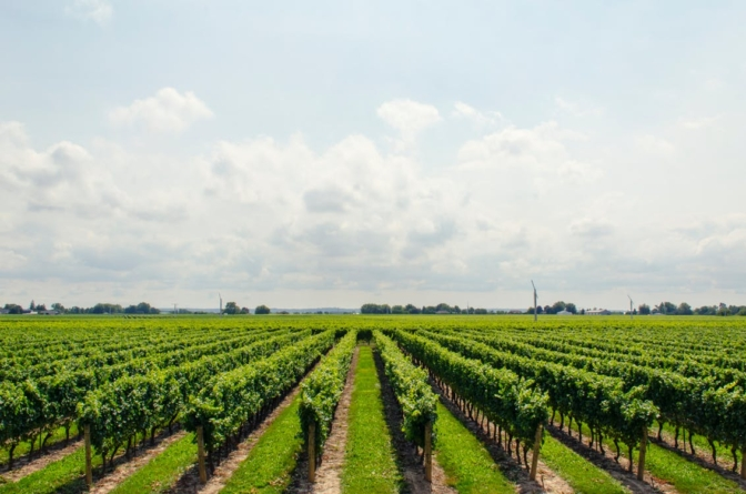 94 million euros for agriculture, applications for IPARD funds are opened in May