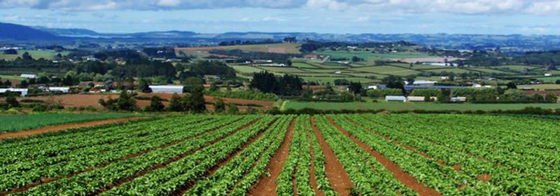 Ahmetaj: 93 million euros support for agriculture